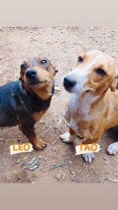 Leo Y Tao